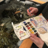 Amy Gagnon paints the residents of the Dorr Museum touch tank