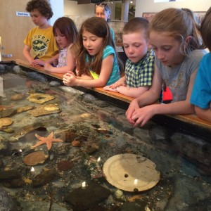 Touch tank with children