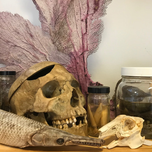 A shelf of curiosities from the Dorr Museum collections