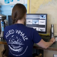 Maddie Kellett '17 wears the t-shirt and has the stainless steel water bottle on hand while matching whale flukes at Allied Whale.