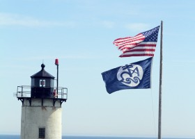 Predation on Common Eider Ducklings on Great Duck Island