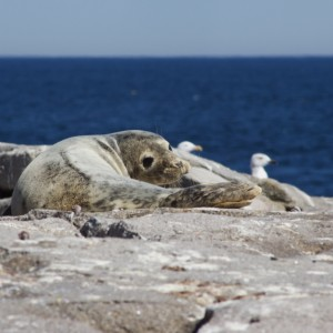seal at mdr