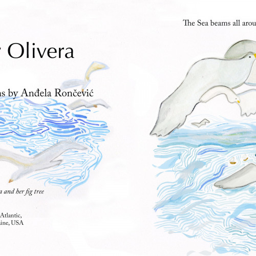 Andela Roncevic '19 - The Making of a Picture Book: Figs for Olivera 003