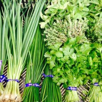 Beech Hill Farm scallions
