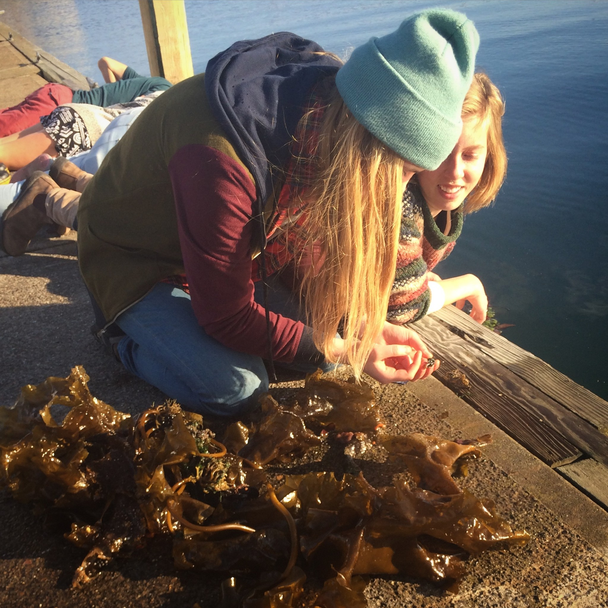 Examining kelp on the municipal dock in Southwest Harbor, Maine with the Ecology: Natural History class