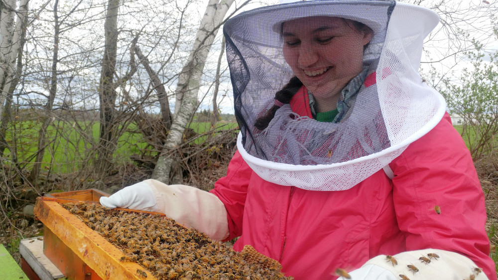 Laurel Streeter '19 works with honey bee hives at College of the Atlantic Peggy Rockefellar Farms. Researchers at COA and University of Maine have joined together to research what is limiting honey production for Maine's bees.