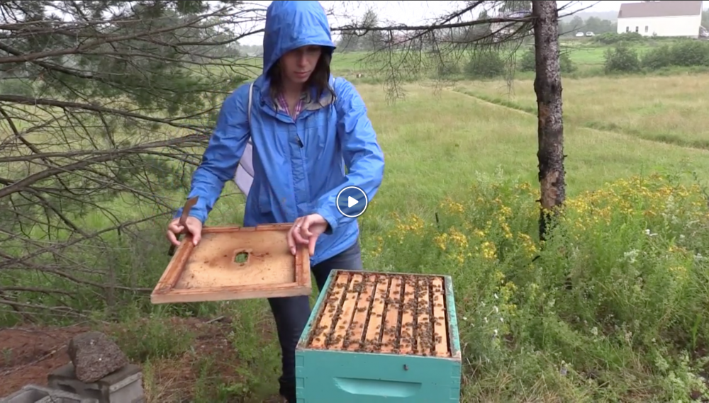 "COA Partridge Chair in Sustainable Agriculture Systems Dr. Kourtney Collum is a co-principal investigator in ""Finding the Sweet Spot: Scale Challenges and Opportunities for Beekeeping and Maple Syrup Production in Maine."""