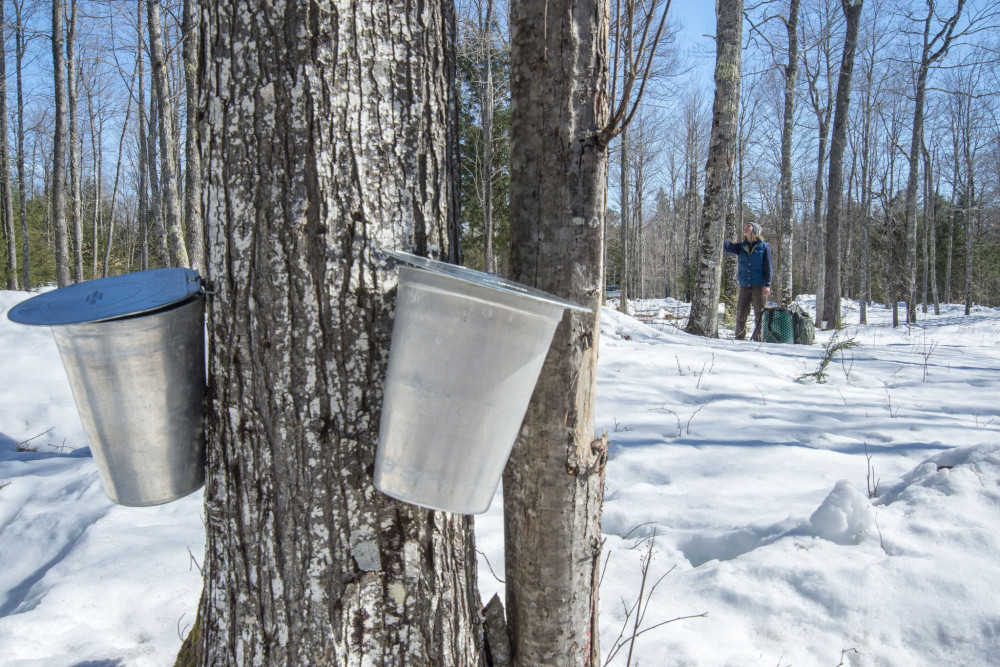 "Students from College of the Atlantic and University of Maine will take part in, ""Finding the Sweet Spot: Scale Challenges and Opportunities for Beekeeping and Maple Syrup Production in Maine,"" thanks to a $500,000 USDA grant."