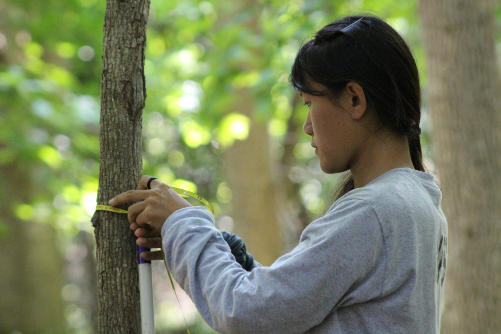 College of the Atlantic student Gemma Venuti '18 measures a red maple sapling as part of her wo...