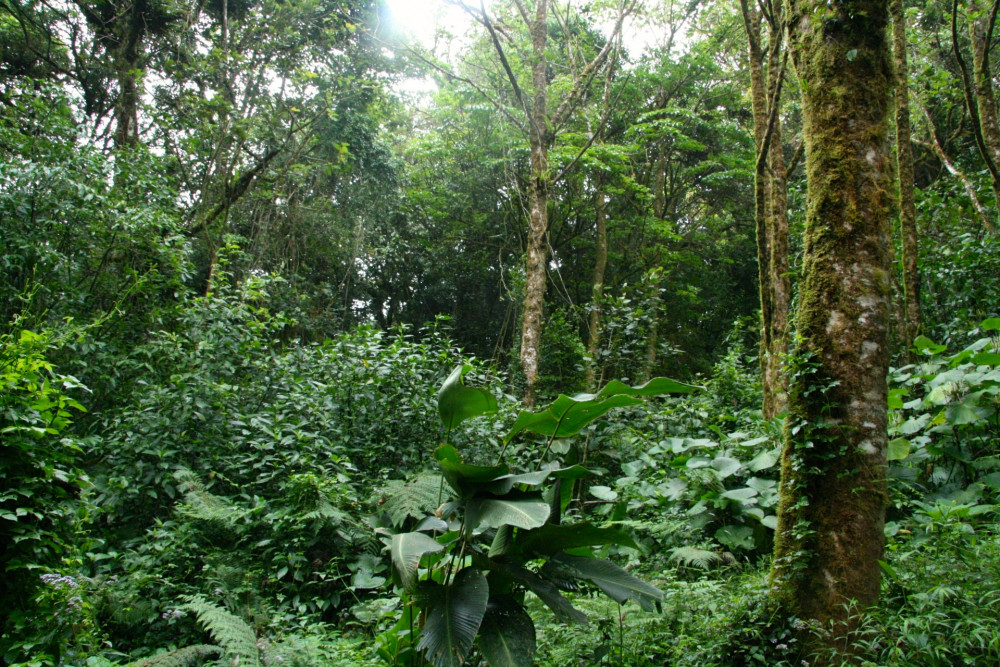 "The dynamics of tropical forests are a focus of research for College of the Atlantic plant sciences professor <a href=""/live/profiles/3291-susan-g-letcher"">Dr. Susan Letcher</a>."