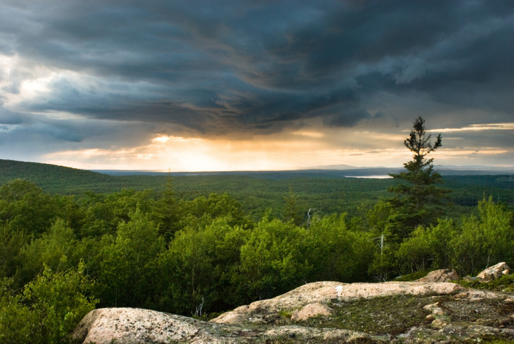 Acadia National Park provides COA students with an optimal setting for studying ecology, natural history, conservation, biology, and a host of other subjects.