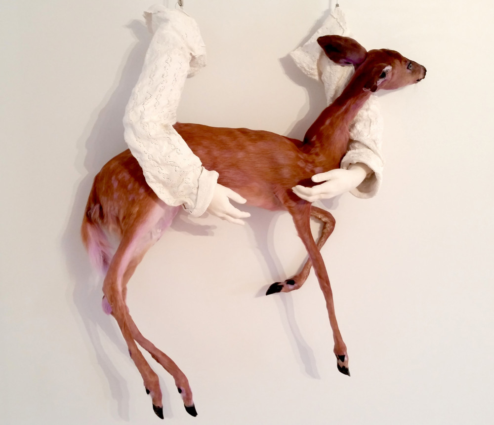 """Knifemarket"" a taxidermic sculpture by Alexandrea Farquhar '19 from her exhibit"