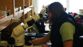 <em>Student Heather Brown views sea urchin embryos under the microscope.</em>