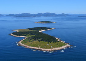 Using Pellet Collection and Chick Regurgitation to Determine the Diet of Herring Gulls (Larus smithsonianus) on Great Duck Island