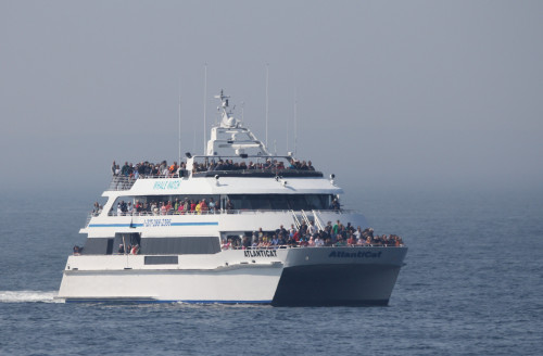 The Bar Harbor Whale Watch places seasonal research assistants from College of the Atlantic in na...