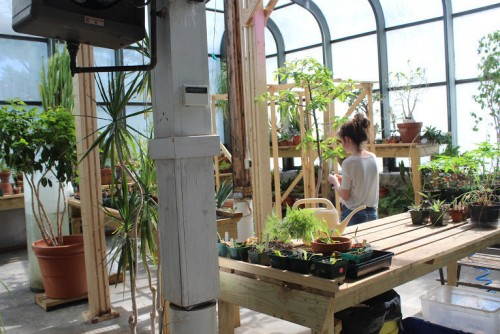 "Many College of the Atlantic students interested in plant sciences work in the <a href=""/greenhouse/"" target=""_blank"" rel=""noopener noreferrer"">Amos Eno Greenhouse</a>, or simply choose to spend time with the plants the greenhouse hosts."