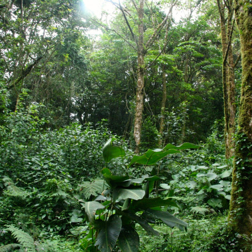 The dynamics of tropical forests — especially those found in South America — are a focus of research for College of th...