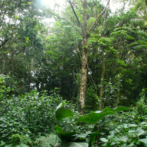 The dynamics of tropical forests are a focus of research for College of the Atlantic plant sciences professor Dr.