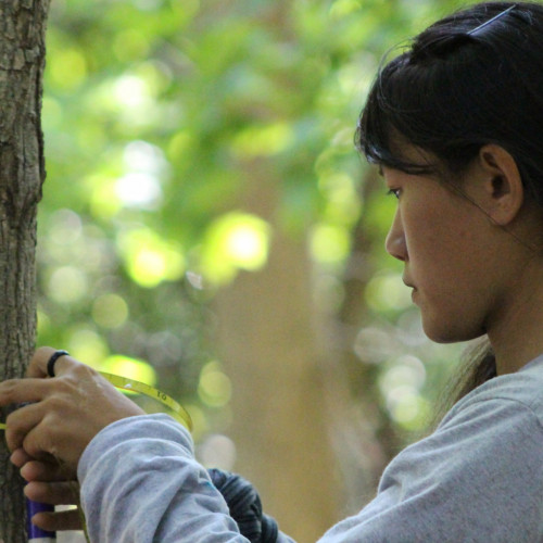 College of the Atlantic student Gemma Venuti '18 measures a red maple sapling as part of her work with the Acadia Nation...