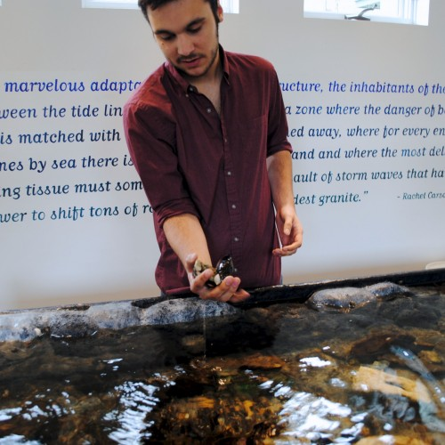 Tyler Prest '16 describing intertidal organisms in the touch tank at the Dorr Museum.