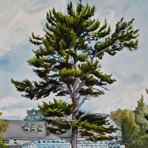 Rob Finn's watercolor exhibition, Tree Portraits, is at the Ethel H. Blum Gallery at College of the At...