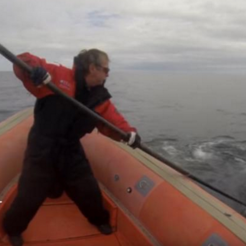 A video still showing Joe Howlett in August of 2016 as he rescued an endangered right whale caught up in a mass of fishing...