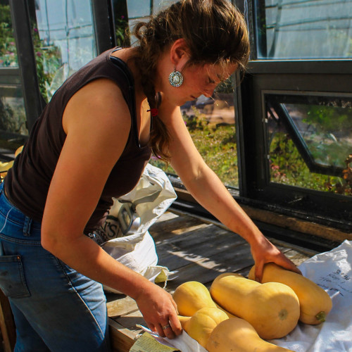 Gillian Welch '19 prepares butternut squash for winter storage in a greenhouse at COA Beech Hill ...