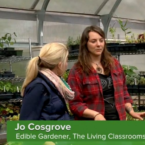 Jo Cosgrove '09 is a greenhouse manager on an urban farm in Baltimore.