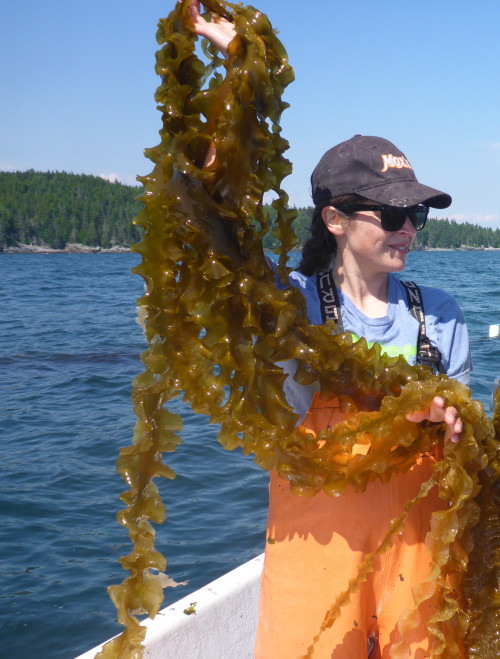 Seaweed farmer Sarah Redmond of Springtide Seaweed has worked as a University of Maine Cooperative Extension and Maine Sea Grant Extension agent, providing marine-based education, outreach, and research, especially in the fields of seaweed and aquaculture. Along with business partner Trey Angera, Redmond will bring her ocean farming knowhow to College of the Atlantic's new saltwater production facility.