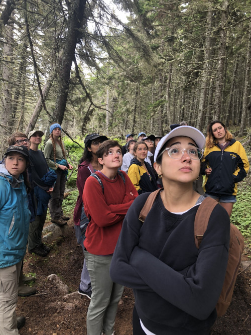 College of the Atlantic Summer Field Institute students learn about forest ecology and threats fr...