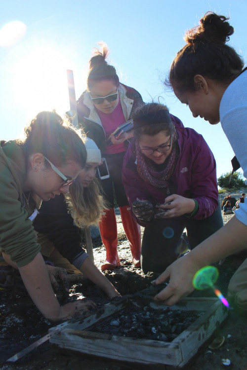 "COA students in Dr. Chris Petersen's <a href=""/live/profiles/1628-marine-biology"">Marine Biology</a> course count clams at Bar Harbor's Hadley Point Beach. As part of the course, students <span style=""font-weight: 400;"">examine the effects of climate change and ocean acidification on marine life. </span>"