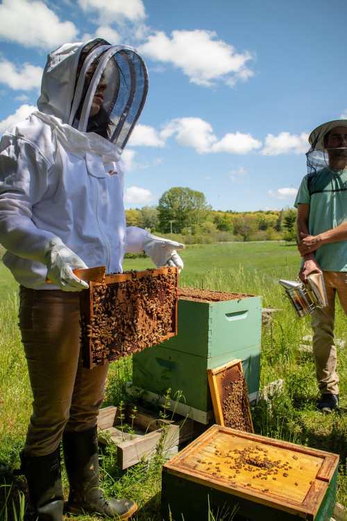 Sweet Spot fellows and program leaders gather on COA Peggy Rockefeller Farms to examine honeybee ...