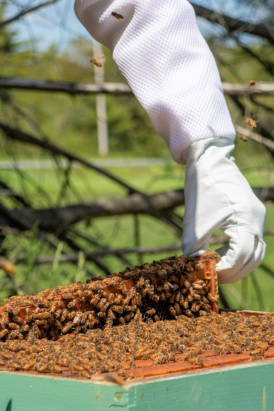 Maine's honey industry is worth $2 million annually, according to the USDA's 2019 Northeaster Reg...