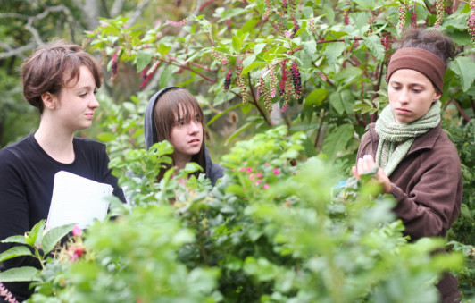Students observing plants in the garden.