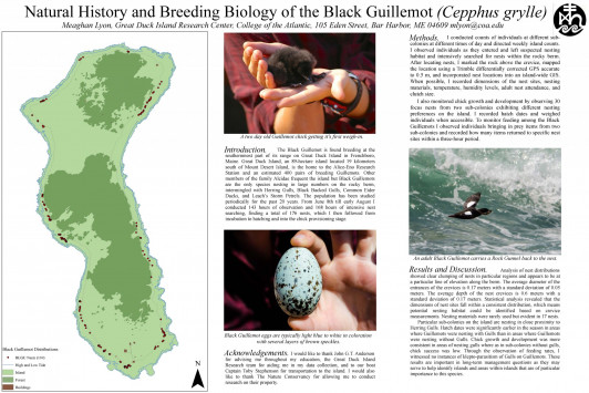 Natural History and Breeding Biology of the Black Guillemot by Meaghan Lyon '16
