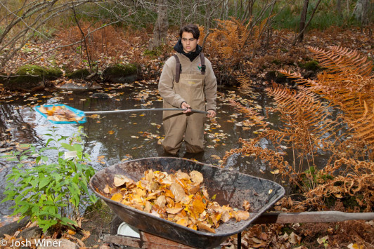 Sam Putnam, the grandson of Anne Kozak, helps clean the brook at Acadia National Park's Wild Gardens of Acadia. A new book on the Wild Gardens written by local authors Anne Kozak and Susan Leiter is published by Arcadia Publishing.