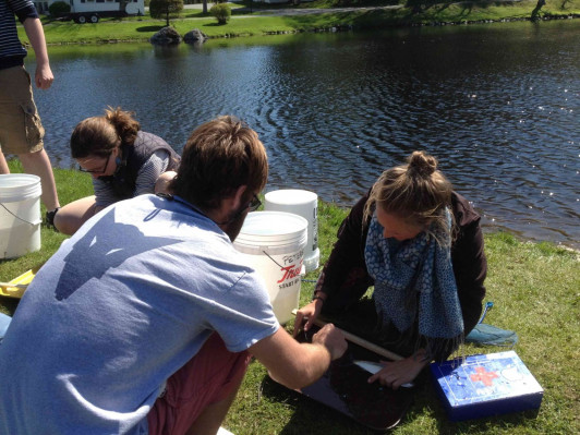 Students in Chris Petersen's Aquatic Methods Research class take scale samples and measure alewives in Somesville.
