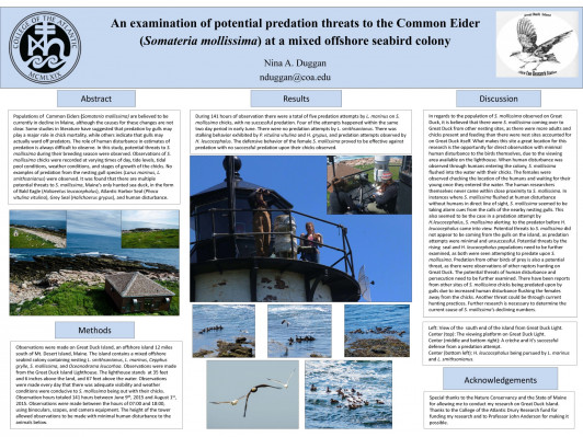 An Examination of Potential Predation Threats to the Common Eider at a Mixed Offshore Seabird Colony by Nina Duggan '18