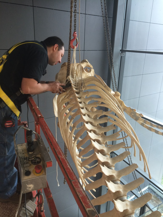 Dan DenDanto of Whales and Nails forming connections within the skeleton.