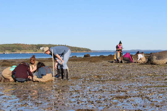 Students measure out their spots to create a grid over the area, one way of gaining a complete picture of clam life in the area.