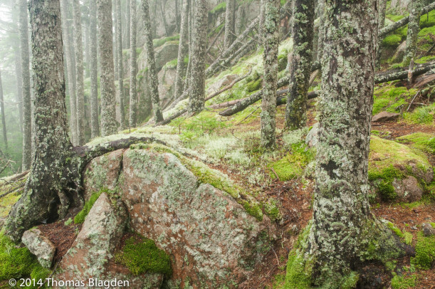 """Moss and Lichen Forest,"" by Tom Blagden, is among the photographs of Acadia National Park featured in ""Glaciers to Granite: Acadia – A Centennial Celebration,"" at College of the Atlantic's Ethel H. Blum Gallery."