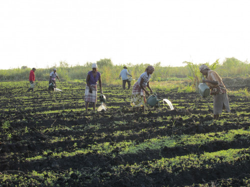 In the early morning hours, members of UNAC, the National Union of Farmers in Mozambique, water their crops in Marracuene,...
