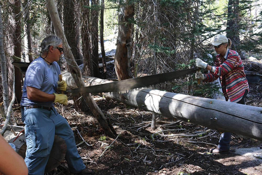 Ken Cline and Zinta Rutins '15 work a two-person crosscut saw to remove a fallen tree in the wilderness of Yosemite National Park.