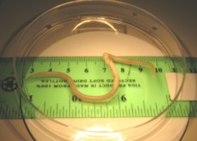 Podcasting the Human Body