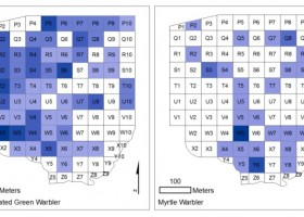 Revisiting MacArthur's Classic Study of Niche Partitioning of Spruce Wood Warblers