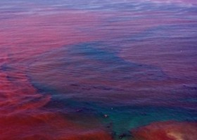 Progress towards Modeling Red Tides and Algal Blooms