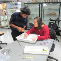 Students in the lab with seaweed