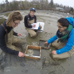 student clam flat survey