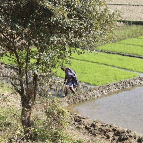 Rather than relying on rice paddies alone this farmer in the mountains of Bangladesh has planted a diversified range of cr...