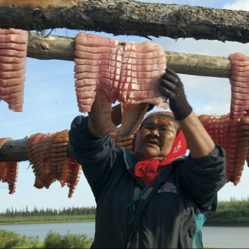 Alice hard at work preparing fillets and hanging them to dry